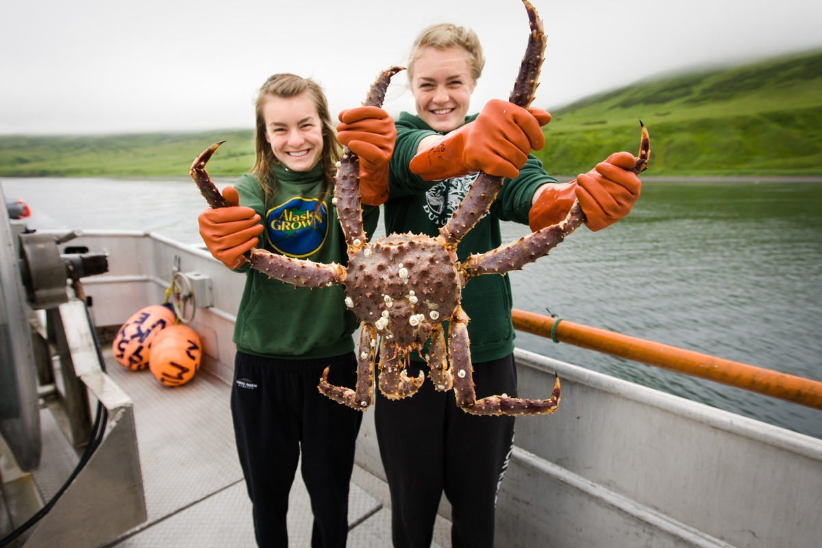 131f68a2b4b71 Bristol Bay Red King Crab - AK Salmon Sisters. Photo by Scott Dickerson.